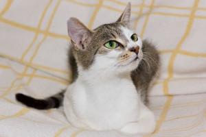 Katze im Katzenhotel