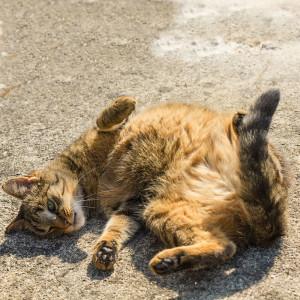 Bewohner in der Katzenpension