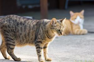 Katze im Garten im Katzenhotel Fulda
