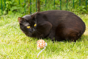 Katze spielt im Garten