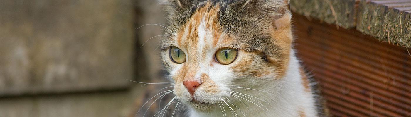 Katzenpension und Katzenhotel bei Fulda