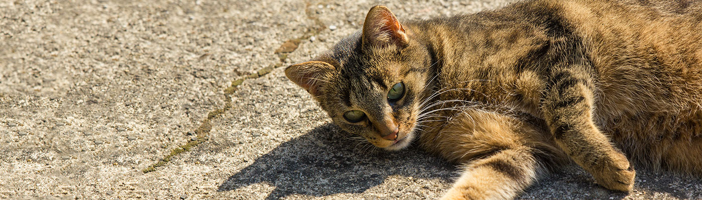 Katze im Katzengarten