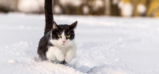 Ihre Katze im Fokus